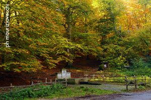 b_300_0_16777215_00_images_stories_laghi_bosco-lago-di-vico.jpg
